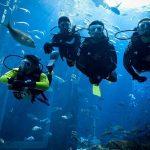 Top 101 Best Dive Watches Under 200
