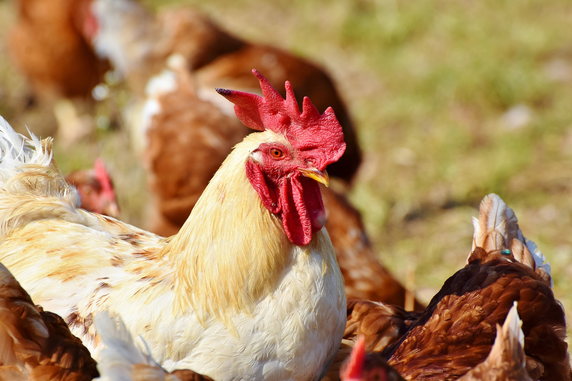 Norfolk Poultry Plant Outbreak
