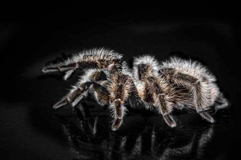 6 Interesting Facts You Should Know About Tarantulas
