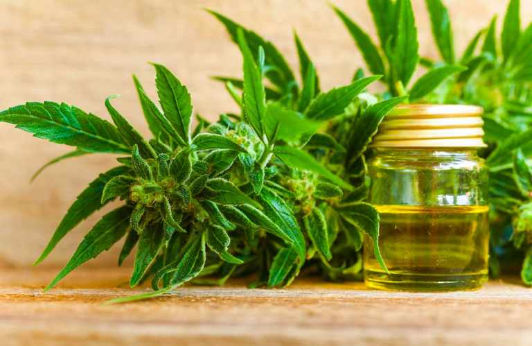 The Difference Between Hemp And CBD Oil You Didn't Know About