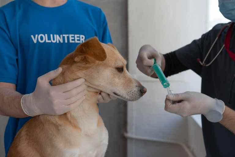 Coronavirus Vaccine for Animals First Registered by Russia